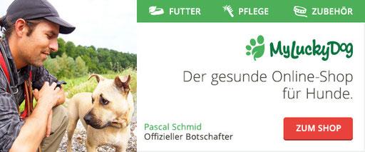 http://dogsittingandtraining.ch/wp-content/uploads/2016/03/myluckydog-pascal-schmid.jpg