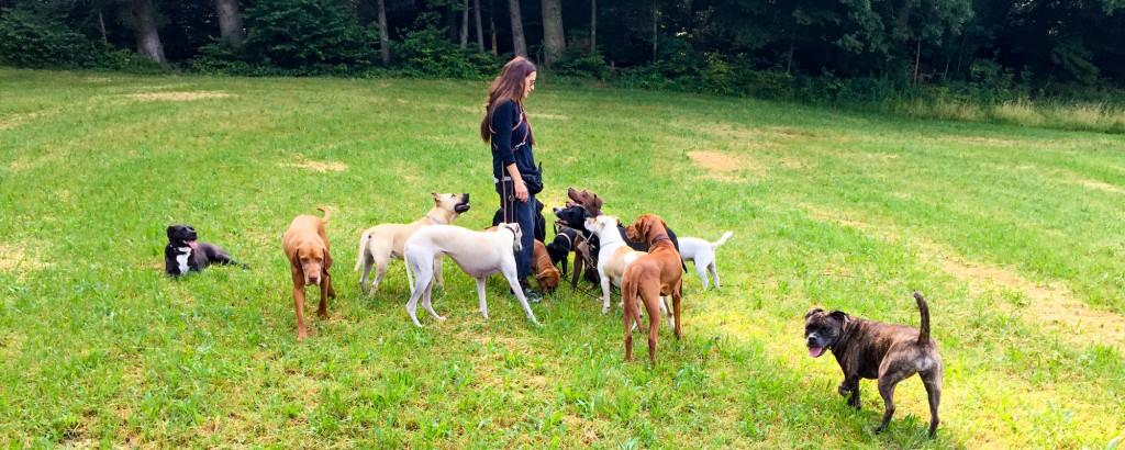 carmen-dogsitting-and-training